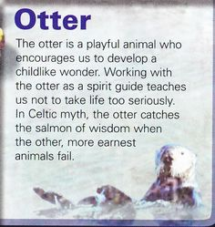 Otter spirit guide