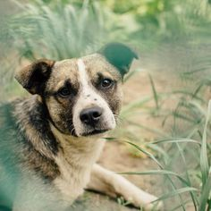 Is your pup a master escape artist? Check out our list of microchip FAQs to determine if an RFID implant is the right way to go.If you're a dog owner, chances are good that your pup's gotten away from you at least once. You might've been on a walk when ...