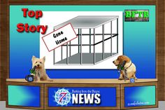 Barking from the Bayou: BFTB NETWoof News December 26, 2016