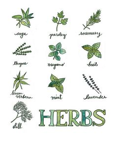 Hey, I found this really awesome Etsy listing at http://www.etsy.com/listing/103612854/herbs-kitchen-print-original