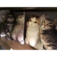 Kussens 'Cat'