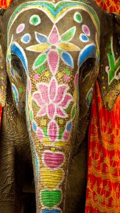 When people hear India they think about elephants which is actually very true. In most Asian countries including India elephants means wisdom. For the Hindus their god named 'Ganesh' is also in the shape of an elephant which represents wisdom. Elephant India, Elephant Love, Colorful Elephant, Elephants In India, African Elephant, Happy Elephant, Baby Elephants, African Animals, Henna Elephant