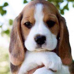 beautiful puppies - Google Search