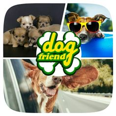 Cute pretty dogs pictures