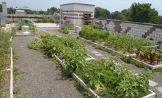 Washington, DC rooftop farm!  Urban agriculture at work thanks to dc greenworks and Bread for the City!