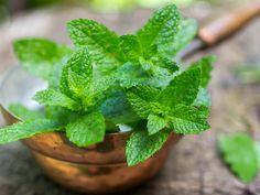Die besten Heilpflanzen für Frauen   Pfefferminze lindert Kopfschmerzen