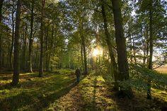 ~Binning Wood~  East Lothian, Scotland