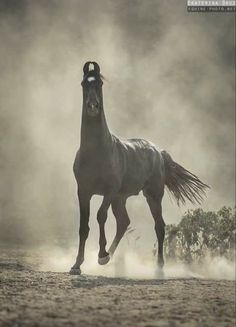 Horse Photos, Horse Pictures, Most Beautiful Animals, Beautiful Horses, Equine Photography, Animal Photography, Zebras, Marwari Horses, Rare Horses