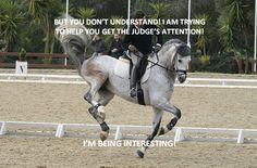 Trying to help you get the judges attention Funny Horses, Cute Horses, Funny Animals, Cute Animals, Equestrian Quotes, Equestrian Problems, Horse Pictures, Funny Animal Pictures, Hunter Jumper
