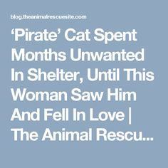 'Pirate' Cat Spent Months Unwanted In Shelter, Until This Woman Saw Him And Fell In Love |  The Animal Rescue Site Blog
