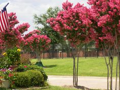 Best Tree for Landscaping in North Texas - Plano Homes & Land