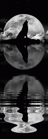 Wolf of the full moon