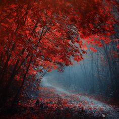 Leaves to Fall by Ildiko Neer on 500px