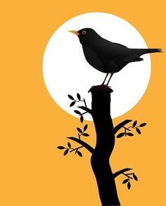 Blackbird, Bird, Silhouette, Sunset A selection of bird photos Silhouette Painting, Bird Silhouette, Free Silhouette, Art And Illustration, Hand Painted Canvas, Canvas Art, Art Painting Gallery, Conte, Bird Art