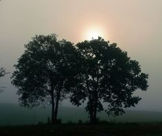 Early Morning Fog #2 by Cutter
