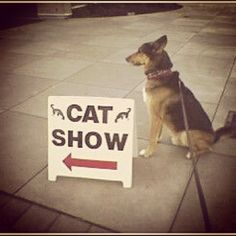 #socialgeneral wanting to attend Cat Show.  Seattle, Washington.  Seattle Center. #gsd