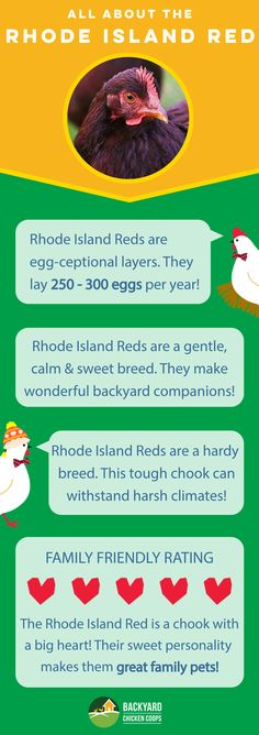 The Rhode Island Red is an all round awesome backyard breed! This chook will be an absolute joy to keep. Check out their breed profile here, http://www.backyardchickencoops.com.au/breed-profile-rhode-island-red/ #loveyourchickens #infographic #rhodeislandredchickens