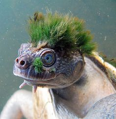 sea flora grew on this turtle's head!!
