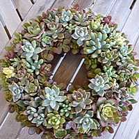 Put your front door to work this summer with a succulent wreath!