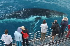 Hervey Bay Whale Watching #HerveyBay #Australia #whales