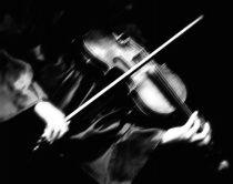 The Violin  © Dana D. Wiggins Chamma