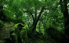 10 Negara Pemilik Hutan Terluas di Dunia, Hutan terluas didunia, hutan terlebat didunia, arti hutan, definisi hutan, apa itu hutan, hutan adalah