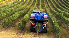 Vineyards, Grape hervest, Tractor, Mecanic Technology, Vindima, New Holland