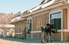 Homer, Alaska- I'd like a Big Mac, large fries and a diet coke please .....oh and make it to go! Hahaha