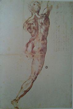 Michelangelo : nudo virile di spalle