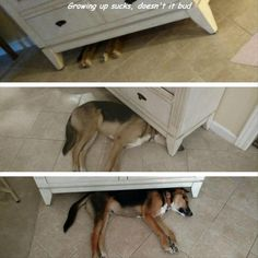 Funny Animal Pictures Of The Day - 23 images - Death To Boredom Funny Animal Memes, Funny Animal Pictures, Cute Funny Animals, Cat Memes, Funny Cute, Funny Dogs, Hilarious, Funny Memes, Funny Vid