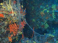 Ayvalık dalış okulu - ida dalış merkezi #scuba #scubadiving #diving #underwaterphotography #dalisnoktam #ayvalikdalis #daliskursu #dalisokulu #dalismerkezi #ayvalikscuba #ayvalikida #idadiving #idadalismerkezi www.idadiving.com