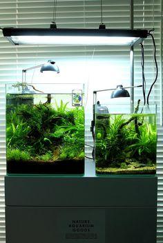 eheim aquastyle low tech, link includes plant list