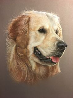 Golden retriever au pastel Peinture au pastel d'après photo - art animalier