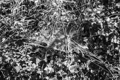 MARC-ANTOINE SERRA http://www.widewalls.ch/artist/marc-antoine-serra/ #design #drawing #photography #video #art