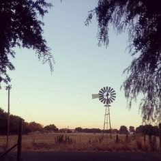 Bainsvlei in Bloemfontein, South Africa I Am An African, Places Ive Been, South Africa, Bucket, Roses, Country, City, Plants, Travel