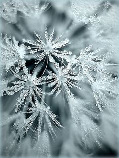 ice crystal, snowflak, christma