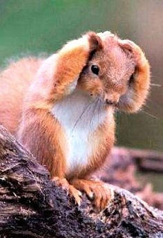 Uh! I forgot where I put my peanut!