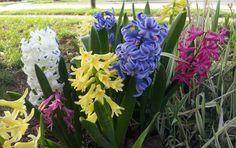 5 aplicaciones para tener un vistoso y florido jardín: Incluye apps para lograr productivo huerto en tu propio hogar