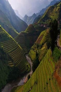 China | terraced rice field
