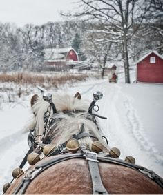 Scrumptious winter colors in that black harness, gold bells, caramel brown coat of fur, frosty blonde mane, and cheery red barn. Inspired winter color palette.