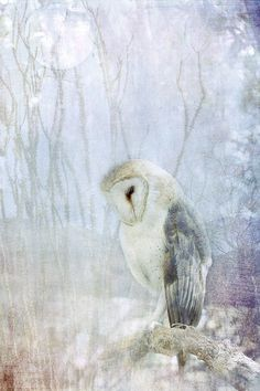 It represents texture because it appears like you can actually feel the soft, silky owl. One could also simulate the feel of the rough branch the owl is perched on. Art And Illustration, Owl Photos, Mundo Animal, Watercolor Bird, Bird Art, Amazing Art, Amazing Things, Painting & Drawing, Art Photography