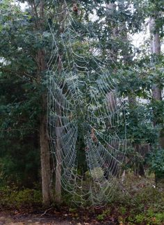 Photograph Spider Web  8 x 10 Nature Print by WoolSculptures, $22.00