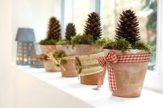 ribbon wrapped terracotta with pine cones and greenery