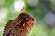 33 Beautiful macro photography of nature – Ilustrações Rare Images, Rare Photos, Funny Animals, Cute Animals, Fotografia Macro, A Bug's Life, Wild Life, Epic Photos, World Images