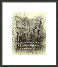 Emerson Quote Into The Universe - original nature photo art by Ann Powell