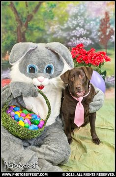 A chocolate lab dog wearing a necktie visits with the Easter bunny. Love this photo? Re-pin it!