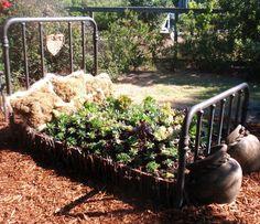 Sandy's garden during Sonoma County Master Gardeners' June 2012 garden tour, Bloomin' Backyards
