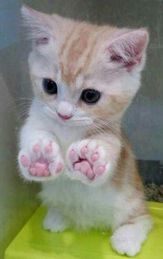 miau meow