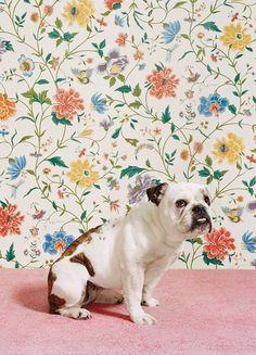 Catherine Ledner, Bulldog 1, 2005 /2015, © www.lumas.com/