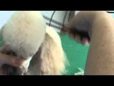 ▶ Poodle topknot, one of the best tutorials I've seen on tk's and blending in the neck.